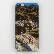 Ancient Wisdom, the California Monterey Cypress Tree iPhone & iPod Skin
