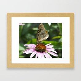 Variegated Fritillary Butterfly #2 Framed Art Print
