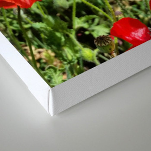 Poppy in a Field 2 Canvas Print