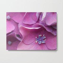Pink & Purple Metal Print