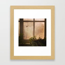 Flying Butterfly Framed Art Print