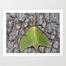 luna moth 2016 II Art Print