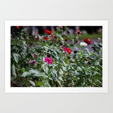 Even The Flowers Are Dead Here Art Print