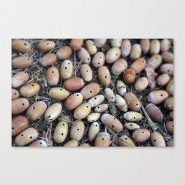 Acorns with Holes No.2 Canvas Print