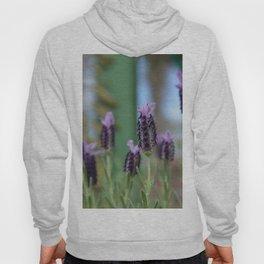 Lavender 3..... Hoody