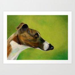 Brindle and white greyhound (a343) Art Print
