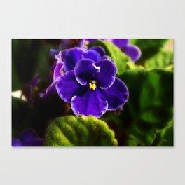 African Violet Canvas Print
