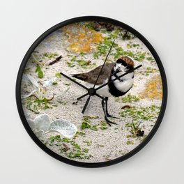 Two Ring Plover Wall Clock