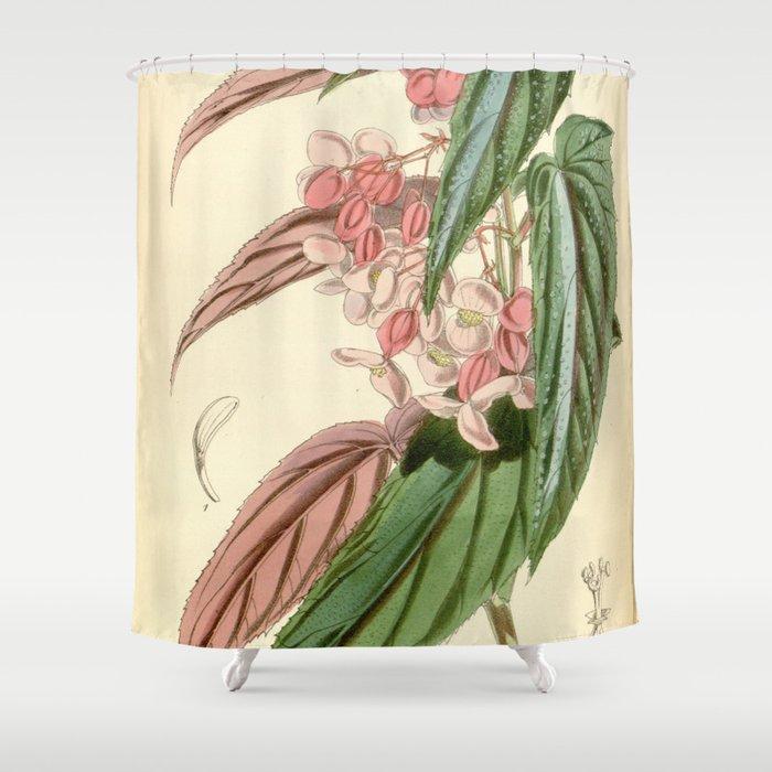 Begonia falcifolia Shower Curtain