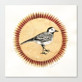 White Wagtail Canvas Print