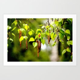 The birch leaves and catkins Art Print