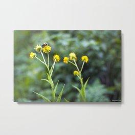 Pollinator Paradise Metal Print