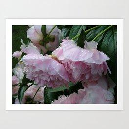 Flower pic 6 Art Print