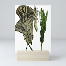 Scarce Swallowtail Mini Art Print