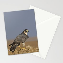 Falcon Scape Stationery Cards
