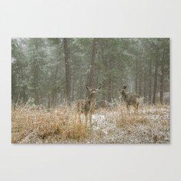 Deer at Keystone Canvas Print