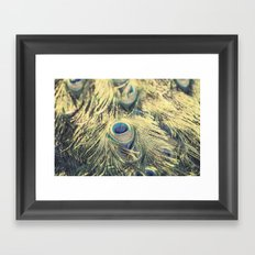 Peacock feathers photography blue green brown photography branches immortality royalty Framed Art Print