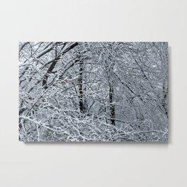 Late Winter Snow Entanglement Metal Print