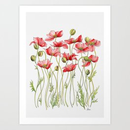 Red Poppies, Illustration Art Print