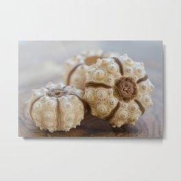 Sputnik Sea Urchin Metal Print