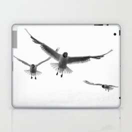Black-headed Gull (Chroicocephalus ridibundus) Laptop & iPad Skin