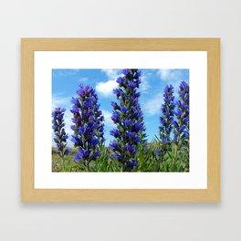 Vipers Bugloss cornwall Framed Art Print