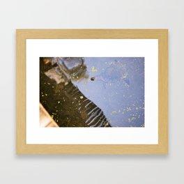 Turtle Pond Framed Art Print