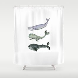 Whales. Shower Curtain