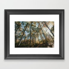 into the woods 08 Framed Art Print