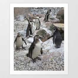 Cool dude - penguins, Colchester Zoo, UK Art Print