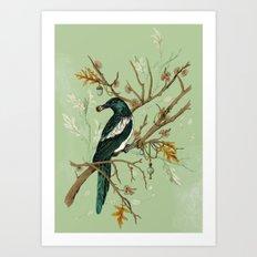 Magpie Jewels Art Print