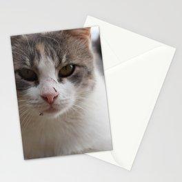 stray cat III Stationery Cards
