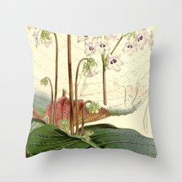 Streptocarpus saundersii 'Cape primrose' 1861 Throw Pillow