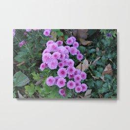 Pink Straw Flowers Metal Print