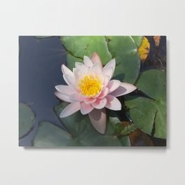 The lovely lily Metal Print