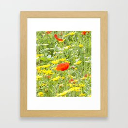poppies and daisies Framed Art Print