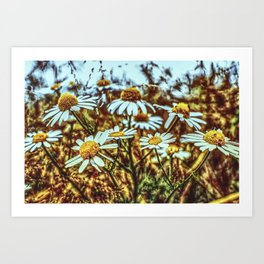 Margeritas Flower Art Print