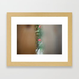 The Last Rose. Framed Art Print