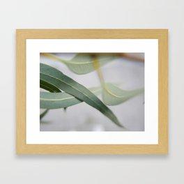 Eucalyptus leaves in the wind Framed Art Print
