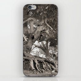1000 years old chestnut tree iPhone Skin