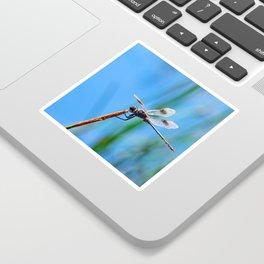 Dragonfly in Blue Sticker