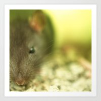 rat Art Prints featuring Rat... by Nature In Art...