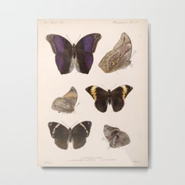 Moths And Butterfly Vintage Scientific Hand Drawn Insect Anatomy Biological Illustration Metal Print