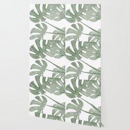 monstera tropical leaves Wallpaper