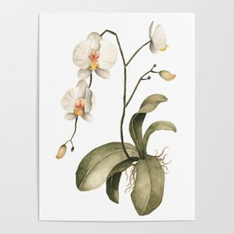 Watercolor Orchid Poster