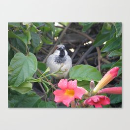 Sparrow in the Vine Canvas Print