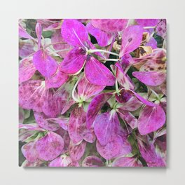 Pink Magenta Flower Petals Scattered Across the Ground Metal Print
