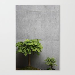 Growth plants Canvas Print