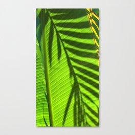 Leaves - Maui Canvas Print