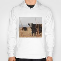 cows Hoodies featuring Moo Cows by Artwork by Brie